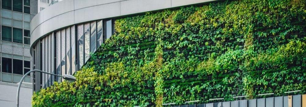 Top 10 Benefits of Living Green Walls and Vertical Gardens